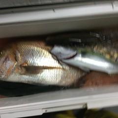 9月 25日(土) 午後便・ウタセ真鯛の写真その9
