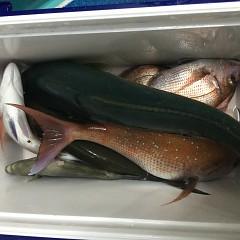 9月 25日(土) 午後便・ウタセ真鯛の写真その11