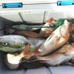 9月 27日(月)午後便・ウタセ真鯛の写真その3