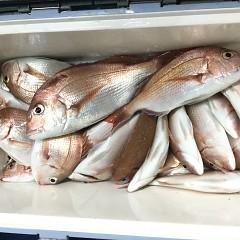 9月 27日(月)午後便・ウタセ真鯛の写真その5