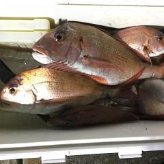 9月 27日(月)午後便・ウタセ真鯛の写真その6