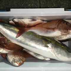 9月 28日(火)午後便・ウタセ真鯛の写真その5