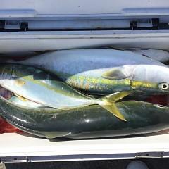 10月 3日(日)午前便・タテ釣りの写真その10