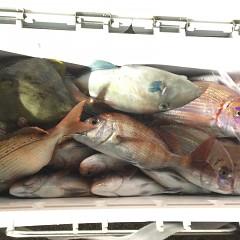 10月5日(火)午前便・タテ釣り・午後便・真鯛釣りの写真その8