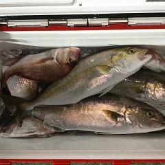 10月14日(木)午後便・ウタセ真鯛釣りの写真その4