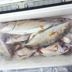 10月 16日(土)午前便・ウタセ真鯛の写真その8