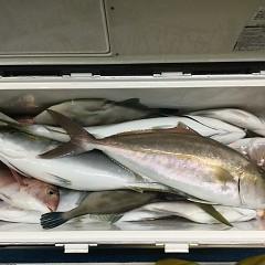 10月 16日(土)午後便・ウタセ真鯛の写真その9