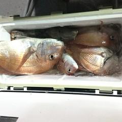 10月 17日(日)午前、午後便・ウタセ真鯛の写真その6