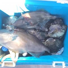 10月 24日(日)午前・カワハギ釣り 午後・ウタセ真鯛の写真その2