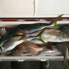 10月 24日(日)午前・カワハギ釣り 午後・ウタセ真鯛の写真その7